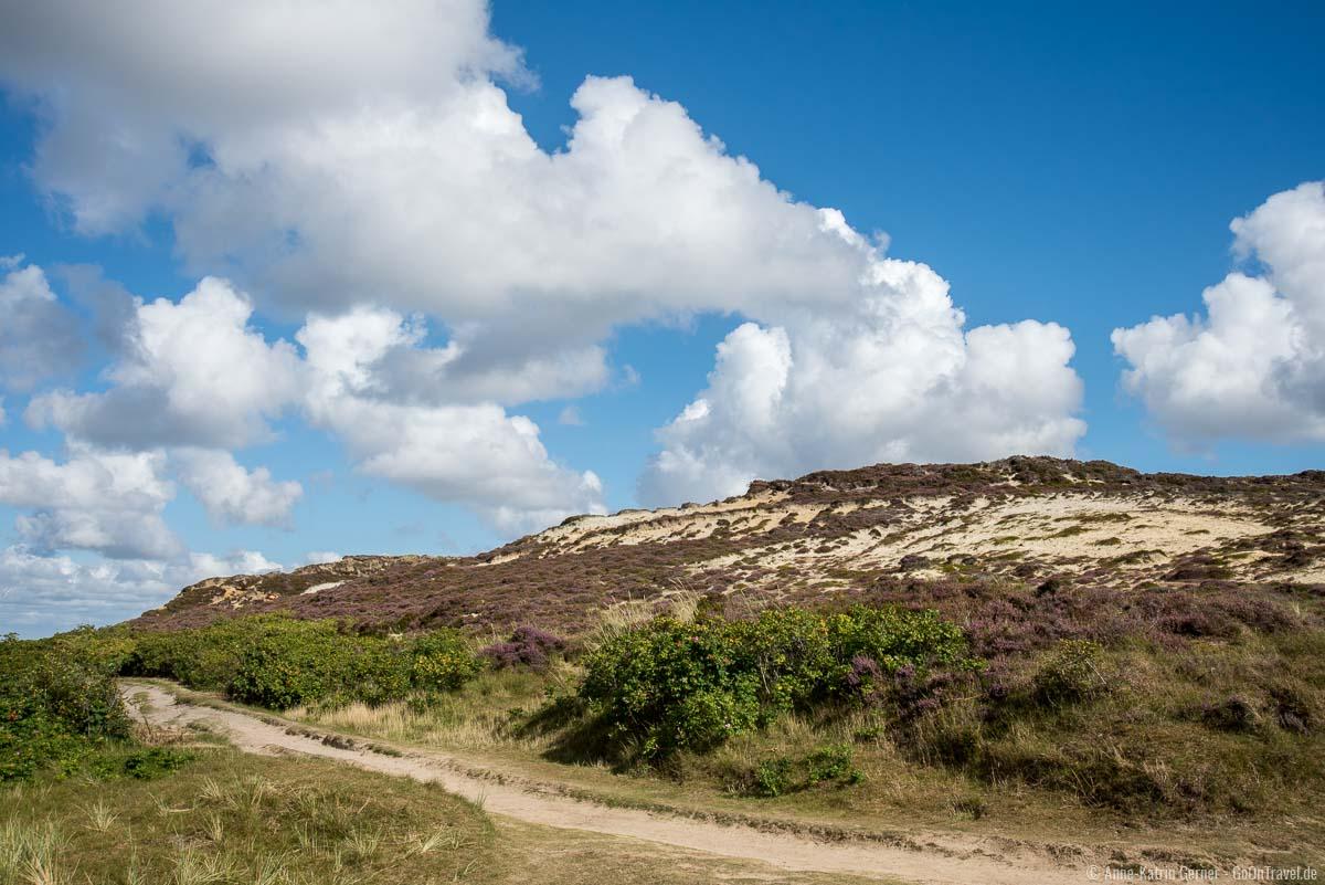 Heidebewuchs am Morsum Kliff