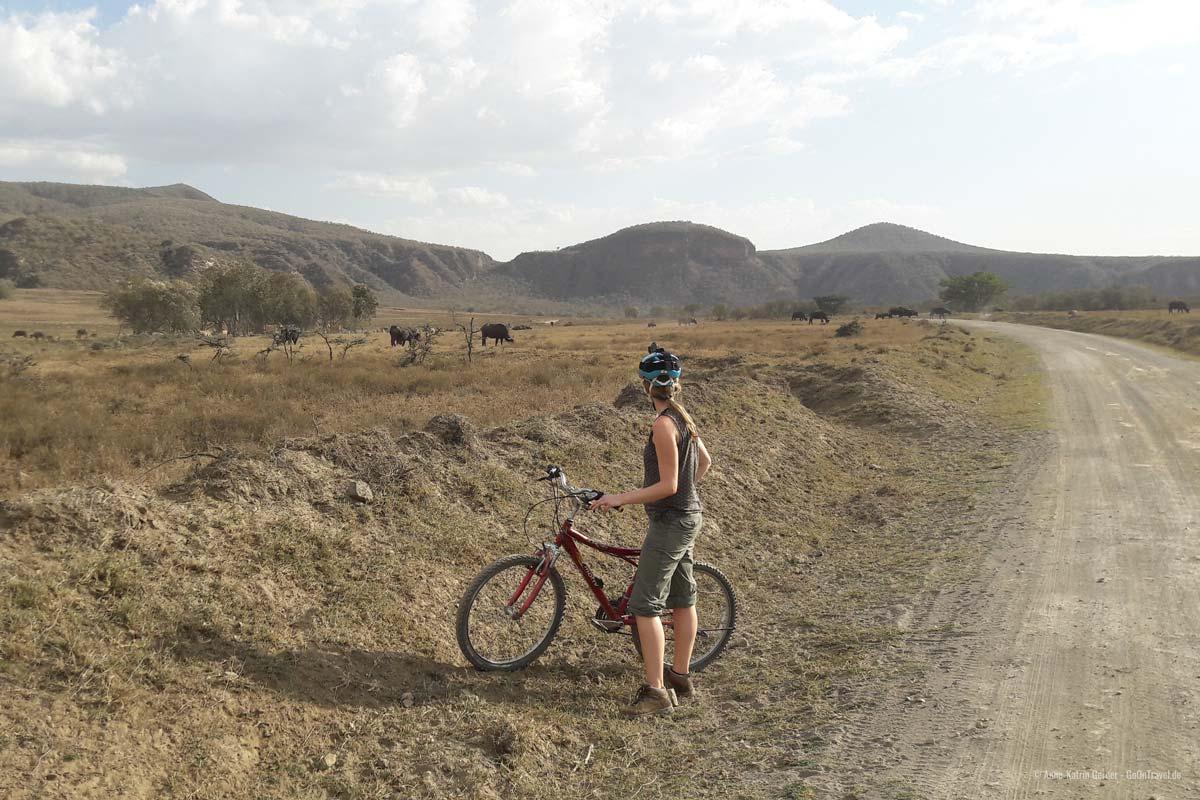 Ein Hells Gate Abenteuer der besonderen Art: mit dem Rad an Büffeln und Zebras vorbei radeln.