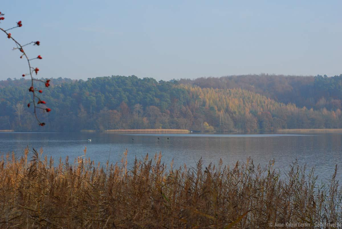 Herbststimmung am Werbellinsee