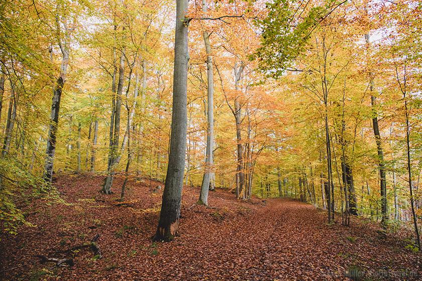 Herbstwald in Brandenburg