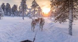 Eine Husky Schlittenfahrt durch Lappland