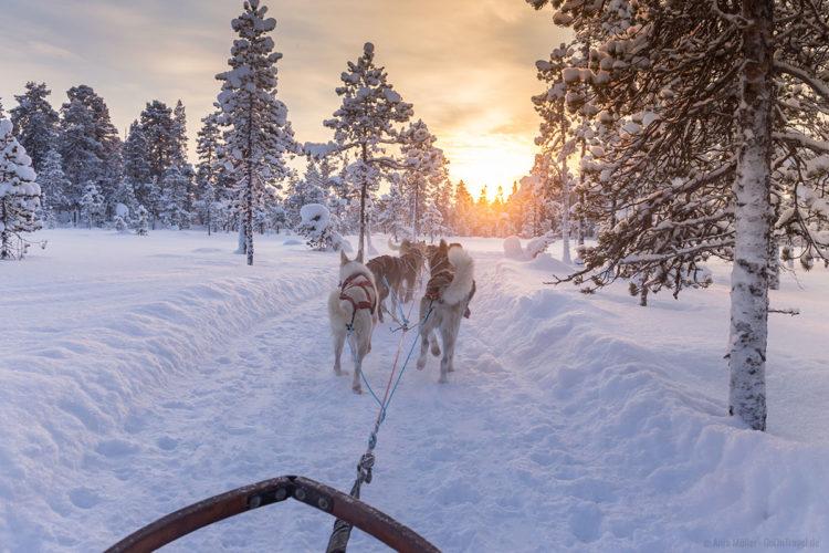 Husky Tour in Schweden
