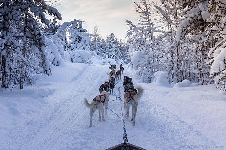 Fahrt durch einen verschneiten Wald.