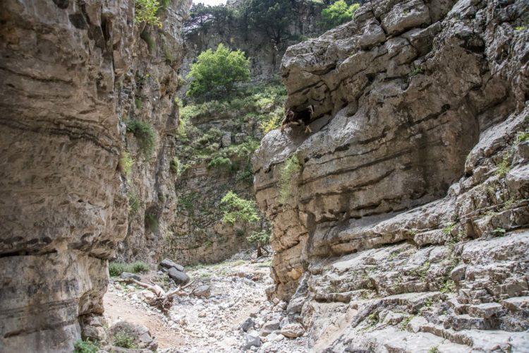Imbros Schlucht Kreta
