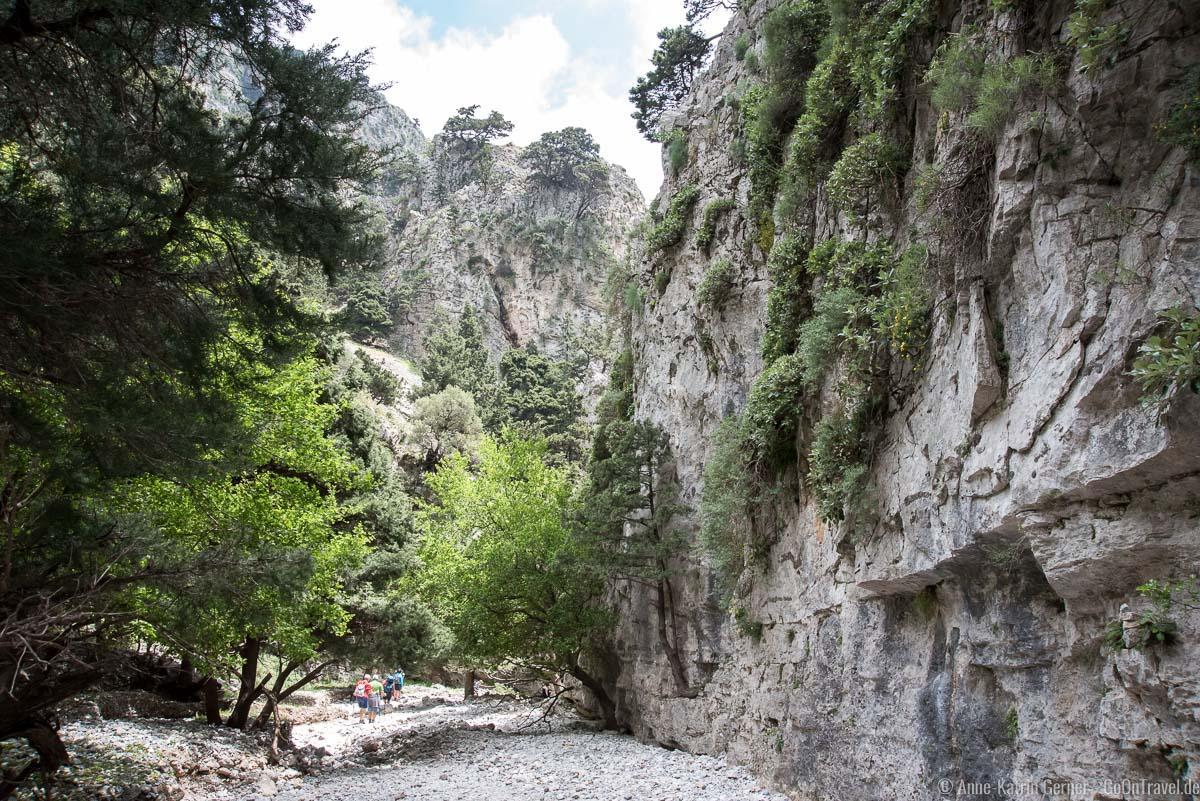 bewaldete Steilhänge in der Schlucht