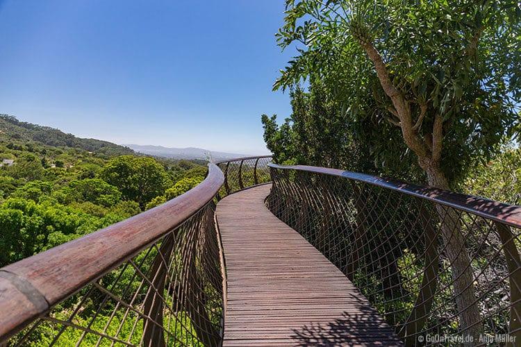Der Baumgang im Arboretum von Kirstenbosch
