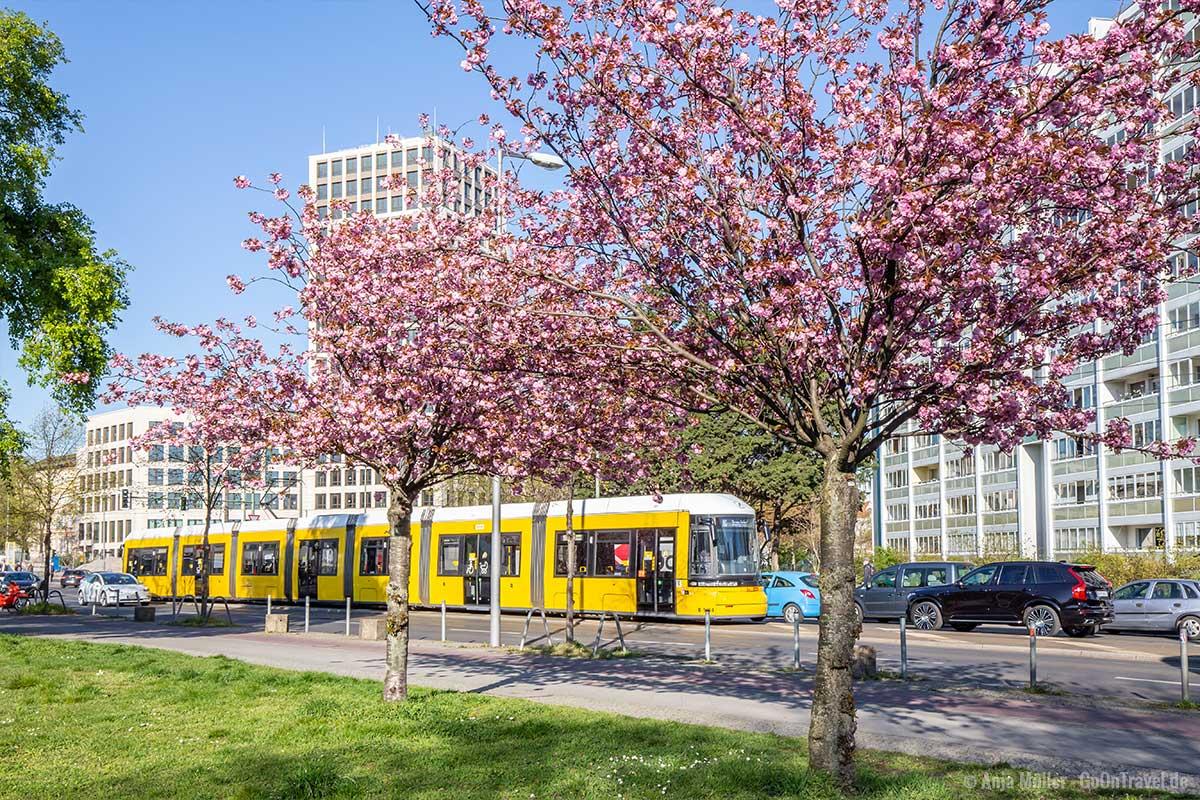 Kirschblüte an der Frankfurter Allee