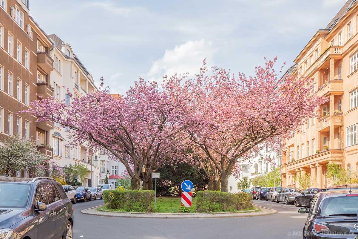 Kirschblüte auf einer Mittelinsel in Schöneberg
