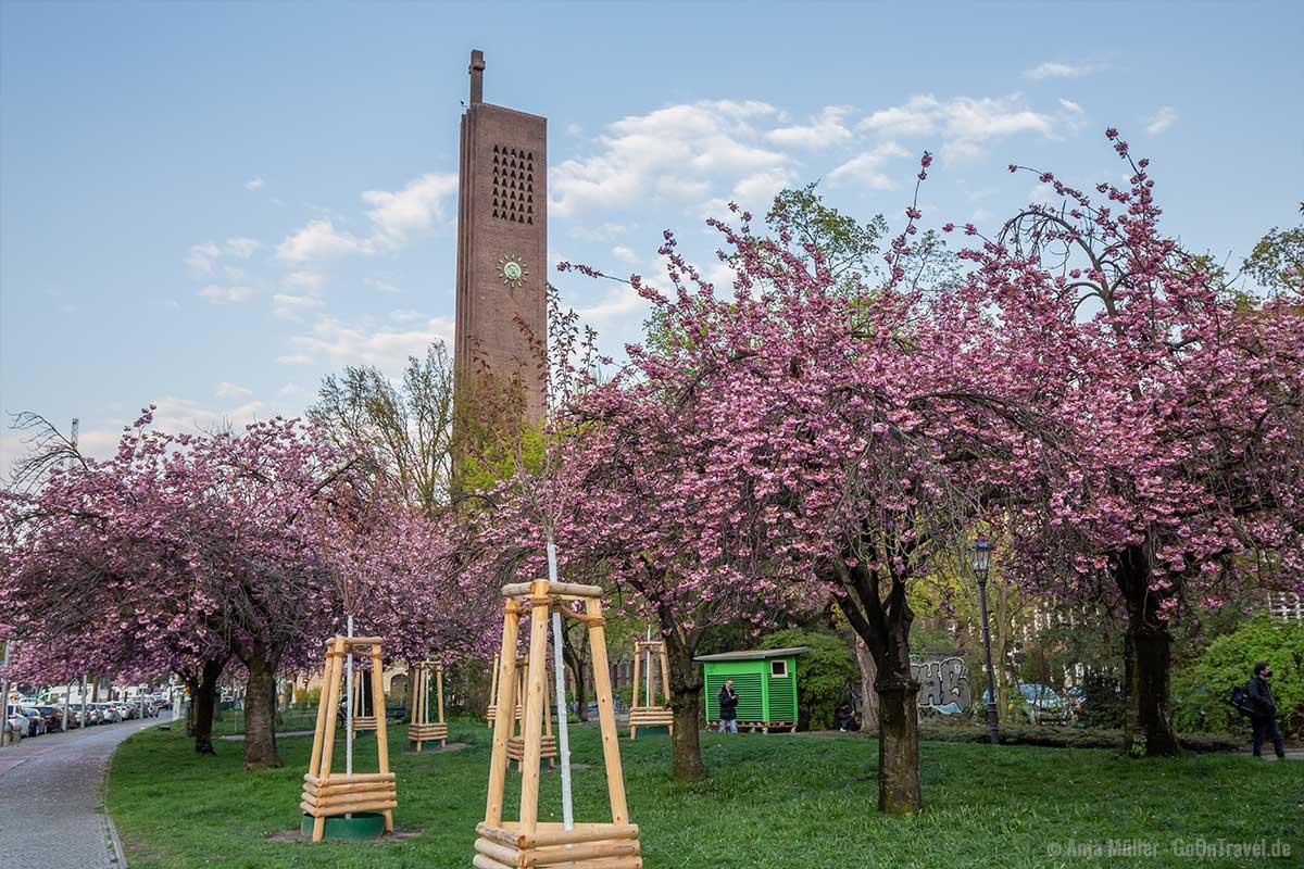 Kirschblüte mit Kirche am Hohenzollernplatz