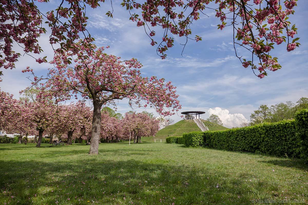 Kirschblüte im Lilienthalpark