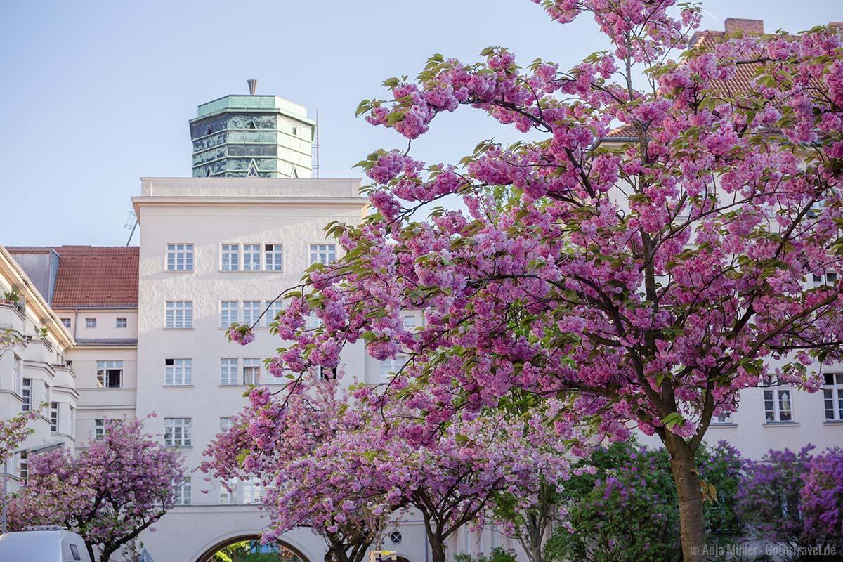 Schönste Reiseziele 2020: Berlin zur Kirschblüte