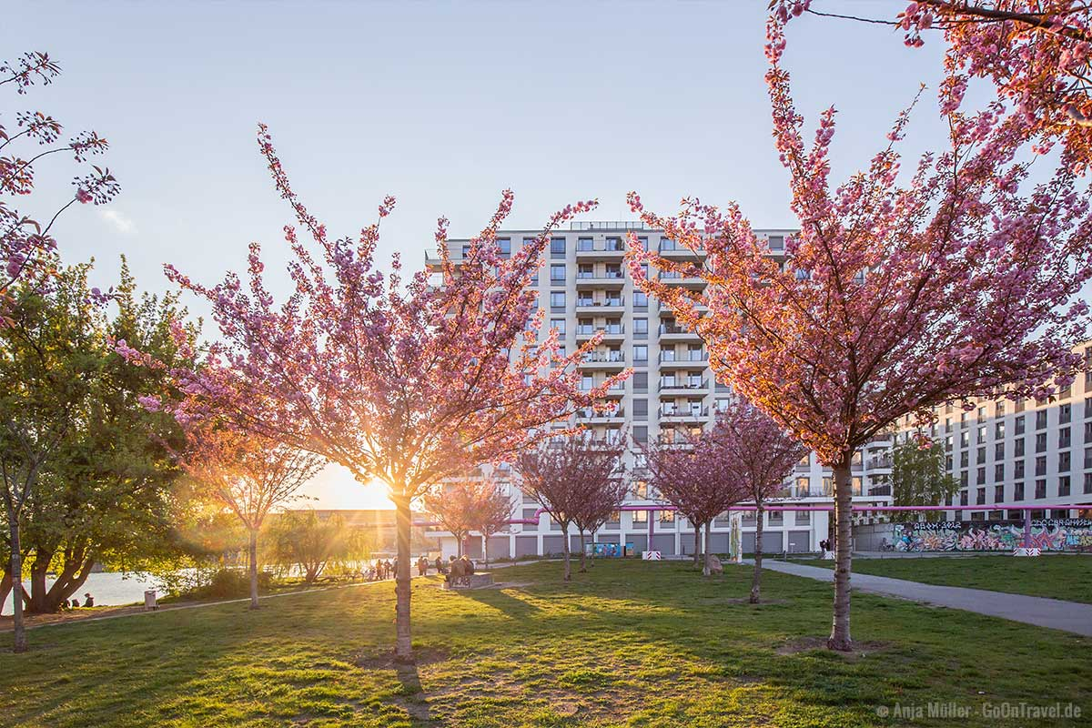 Sonnenuntergang mit Kirschbäumen
