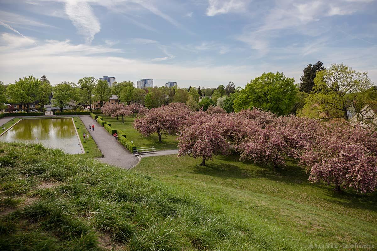 Blick auf die Kirschblüte im Lilienthalpark
