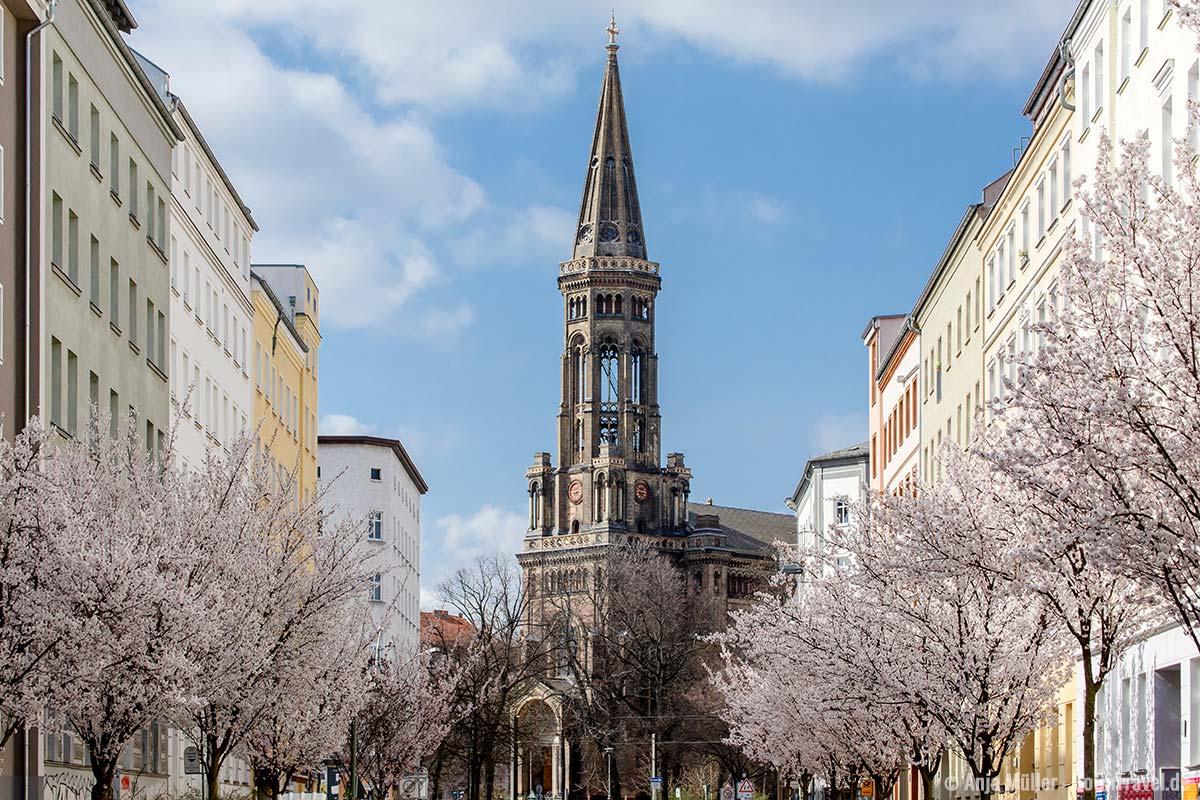 Weiße Kirschblüte mit der Zionskirche im Hintergrund