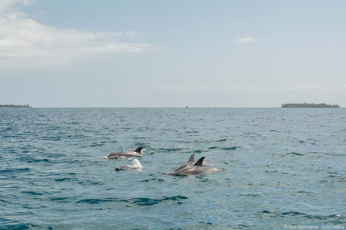 Delfinschule vor Wasini Island