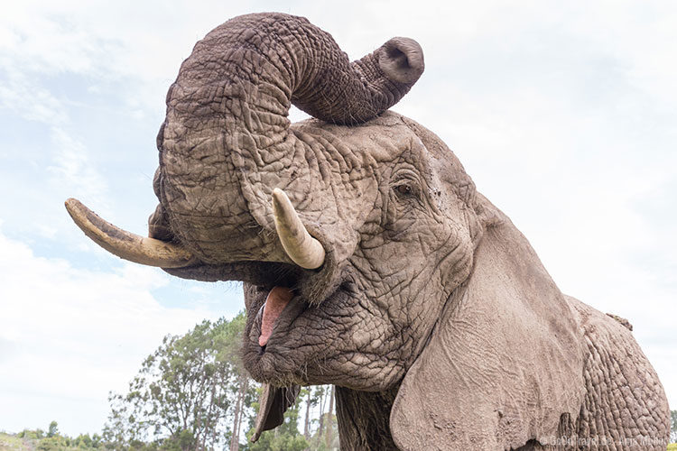 Dem Elefanten ganz nah