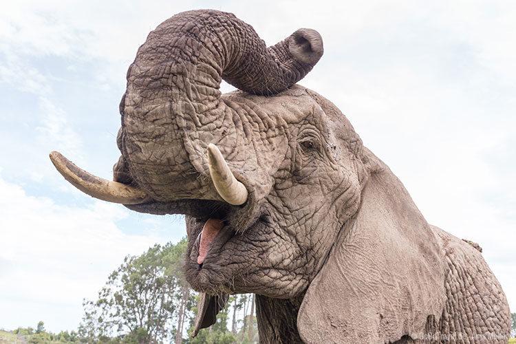 Im Knysna Elephant Park kommt man Elefanten ganz nah