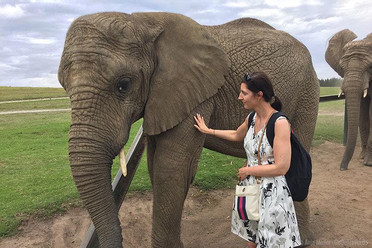 Einen Elefanten zu berühren ist ein ganz besonderes Erlebnis.