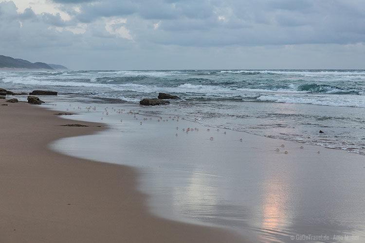 Auf Turtle Tour im iSimangaliso-Wetland-Park. Statt Schildkröten gab es jede Menge Krabben am Strand.