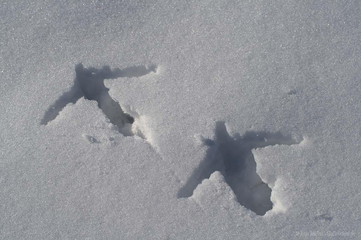 Kranichspuren im Schnee