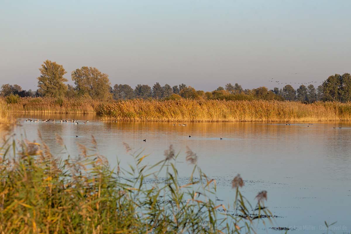 Teichwiesen bei Linum