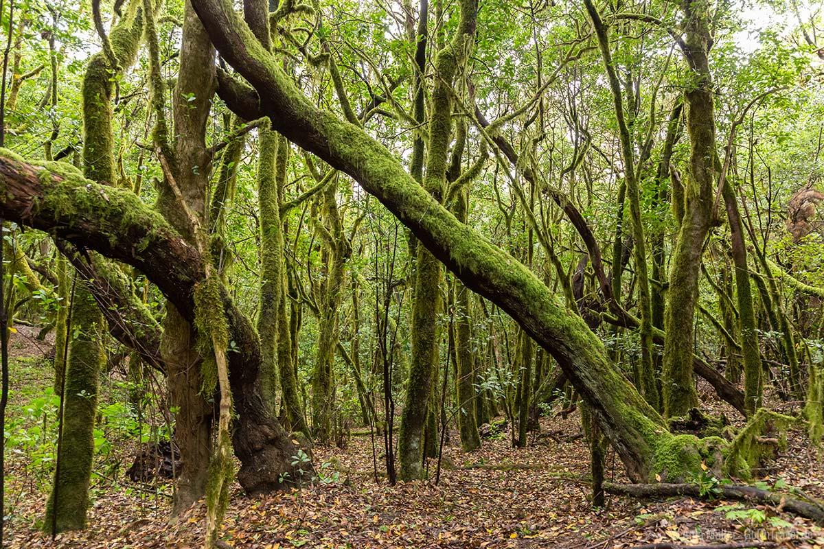 Wald am Wanderweg Canada de Jorge