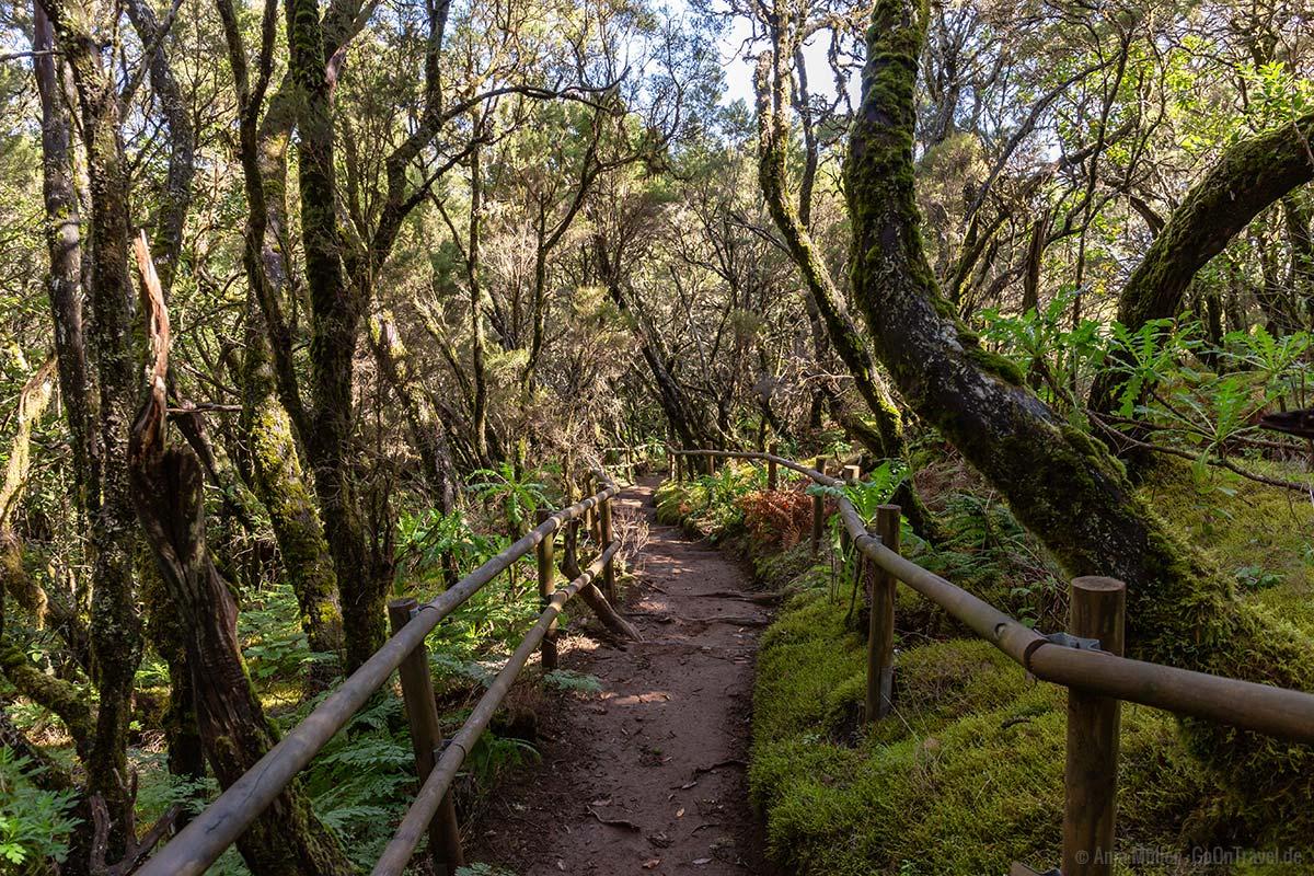 Wanderweg: El Contadero – Chorro de El Cedro auf La Gomera