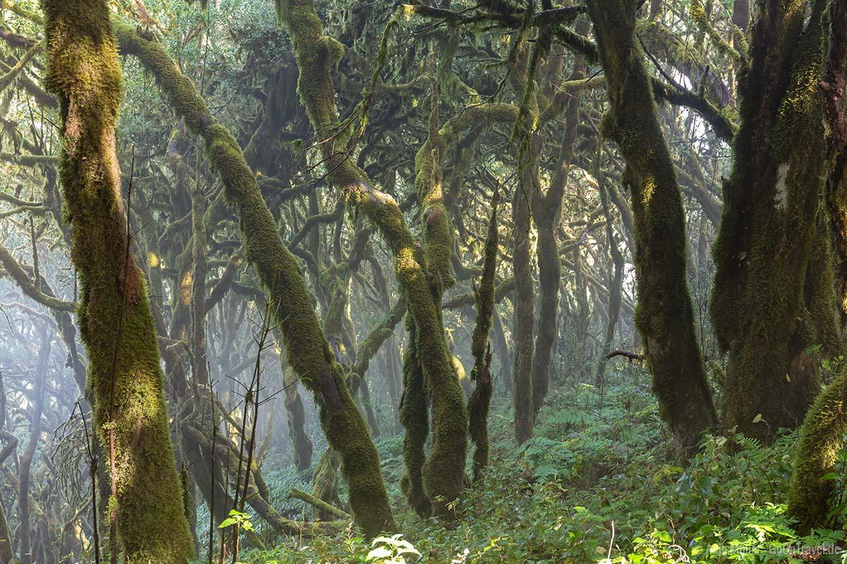 Bäume am Wanderweg Raso de la Bruma – Risquillos de Corgo