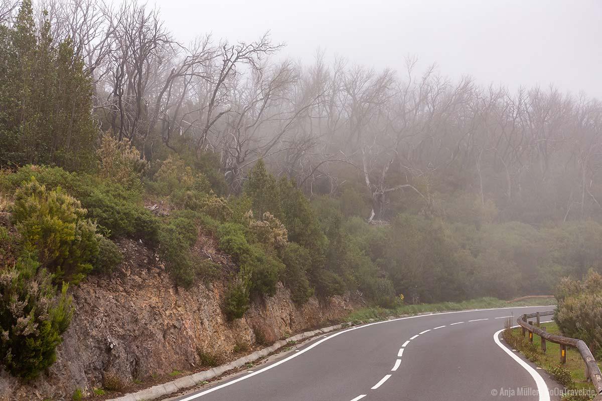 Straße bei Nebel im Nationalpark Garajonay