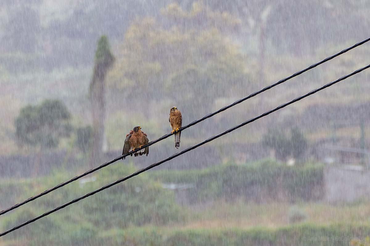 Regen auf La Gomera