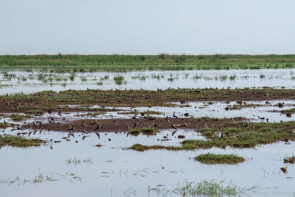 Der Lake Manyara ist ein Paradies für Vögel