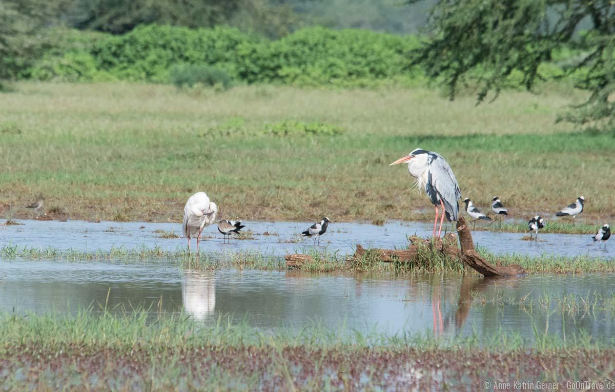 Am Ufer des Lake Manyara