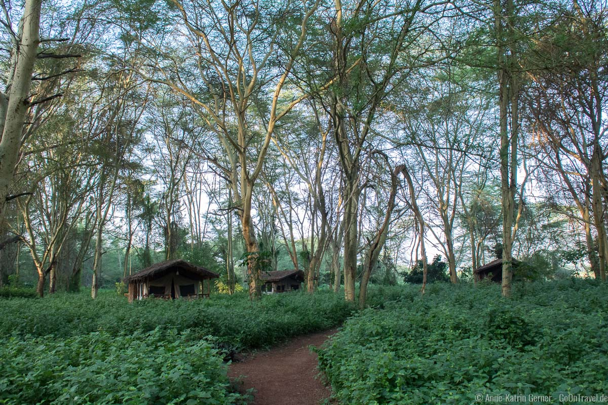 Migunga Tented Camp in Tansania