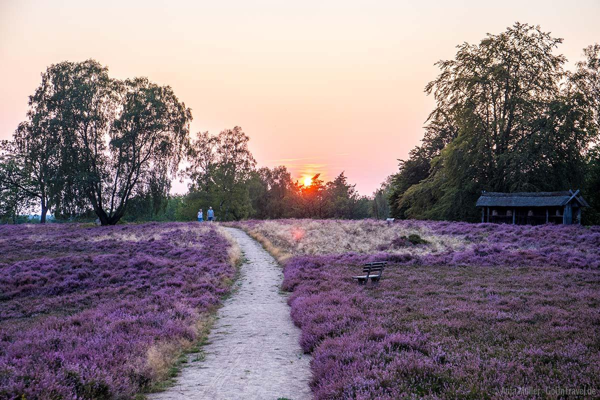 Lüneburger Heide zum Sonnenuntergang