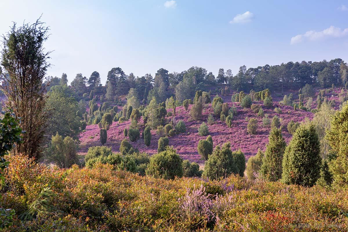 Blick auf den Totengrund mit den Heideflächen und Wacholder