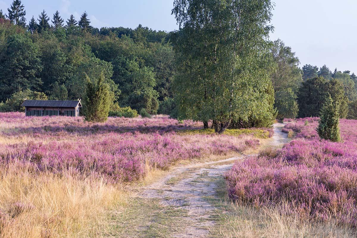 Wanderweg in der Lüneberger Heide