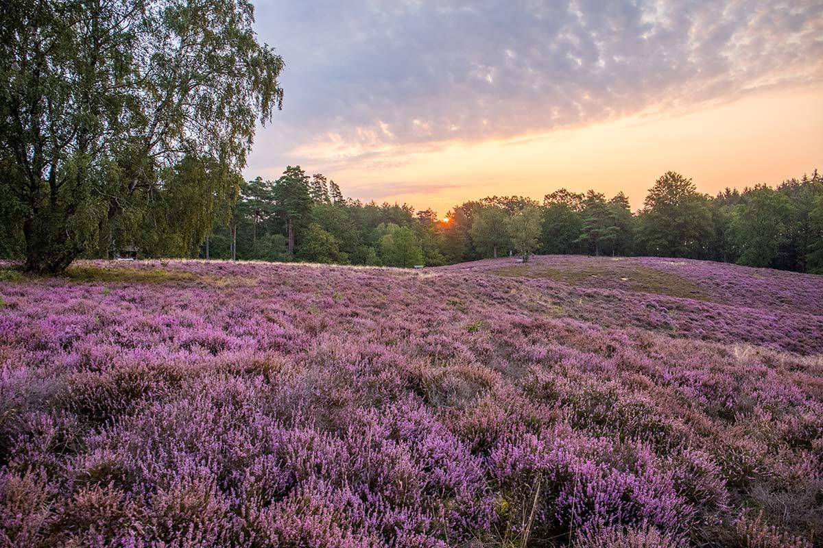 Sonnenaufgang in der Lüneburger Heide