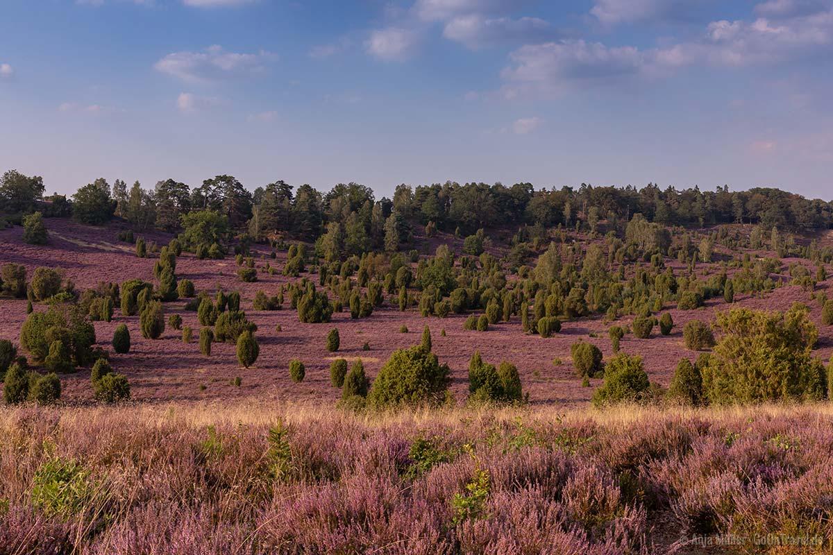Sehenswürdigkeit in der Lüneburger Heide: Totengrund