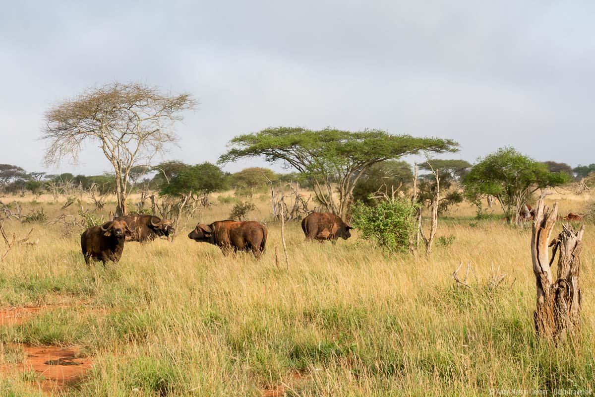 Büffelherde in typischer Landschaft von LUMO