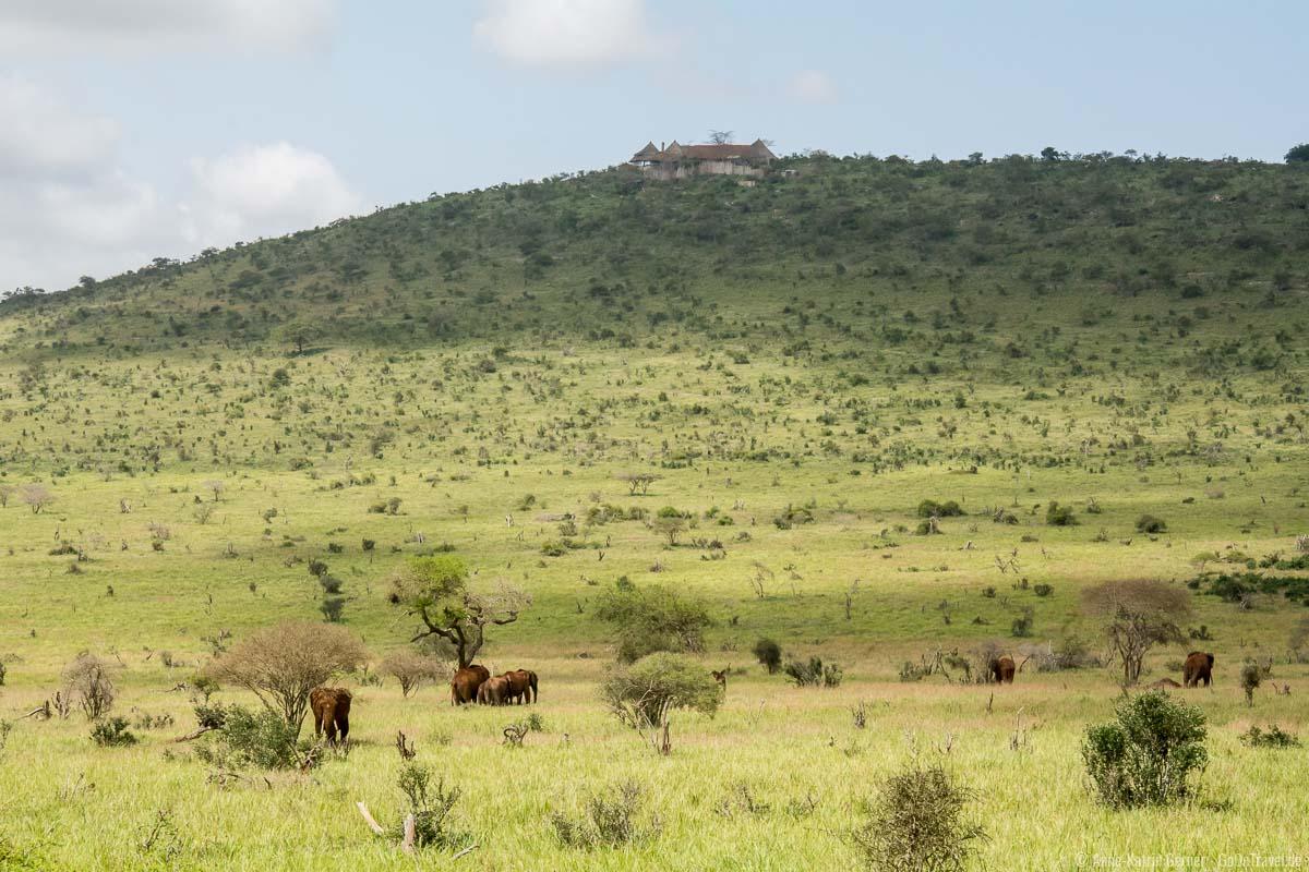 Elefanten suchen Schatten in der Mittagshitze im LUMO Conservancy