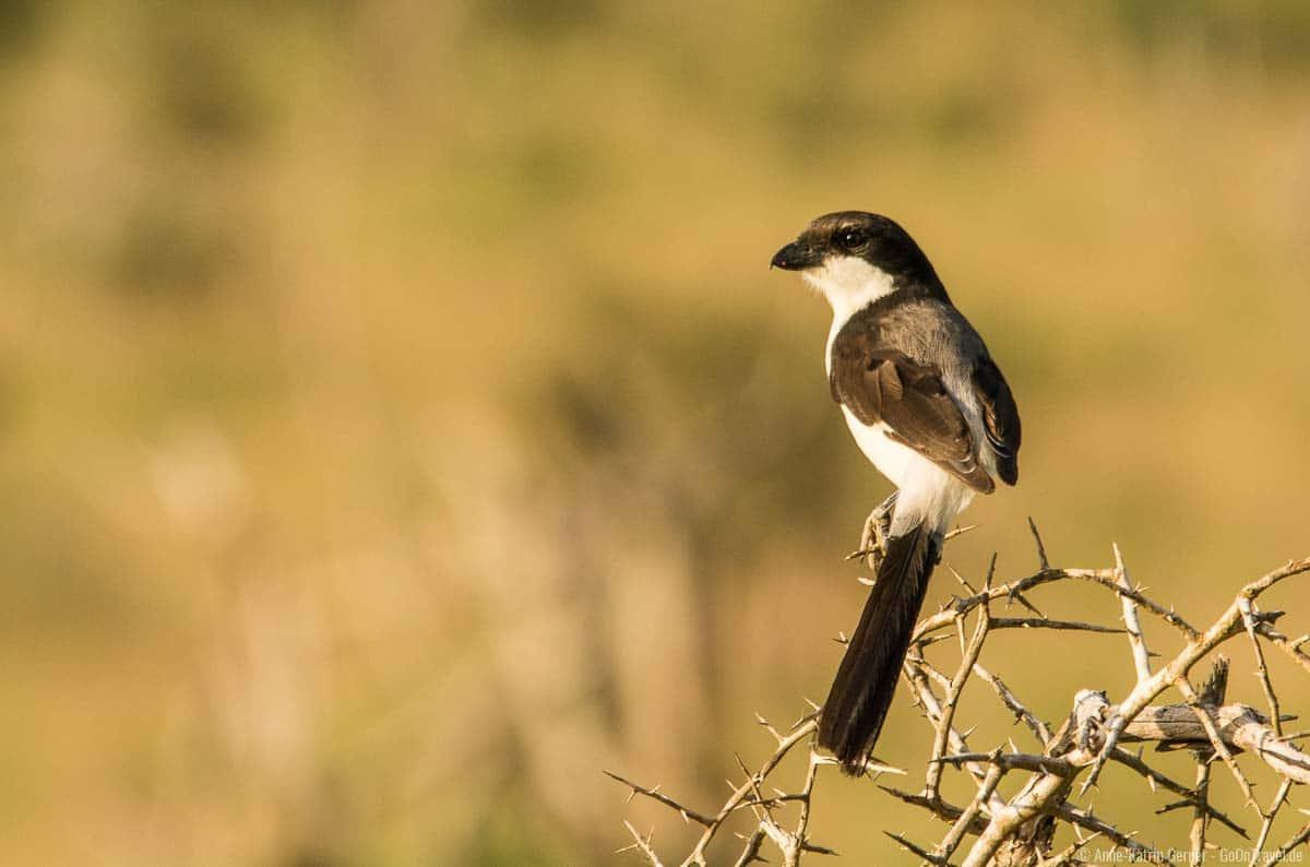 viele unterschiedliche Vogelarten lassen sich in LUMO beobachten