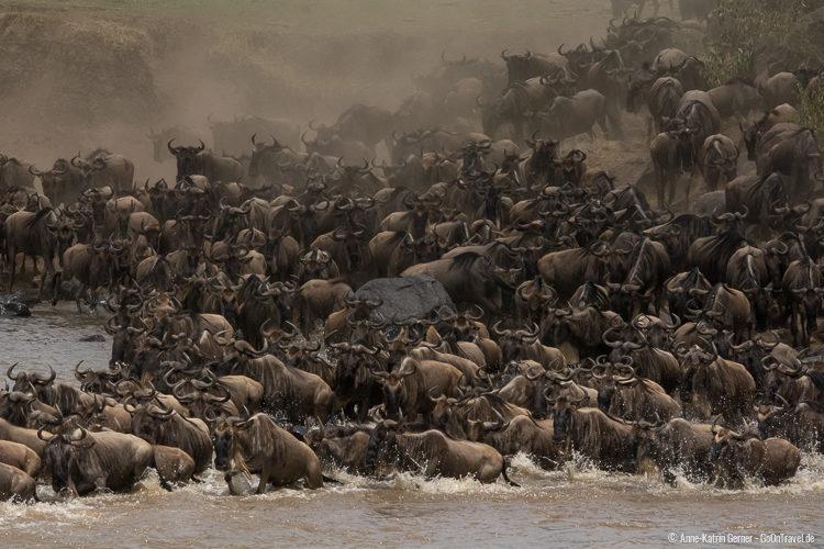 die große Tierwanderung am Mara Fluss