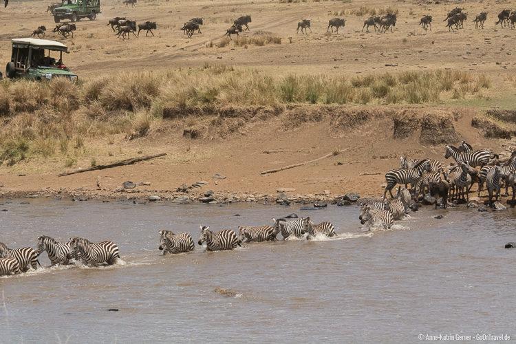 die Zebras machen den Anfang