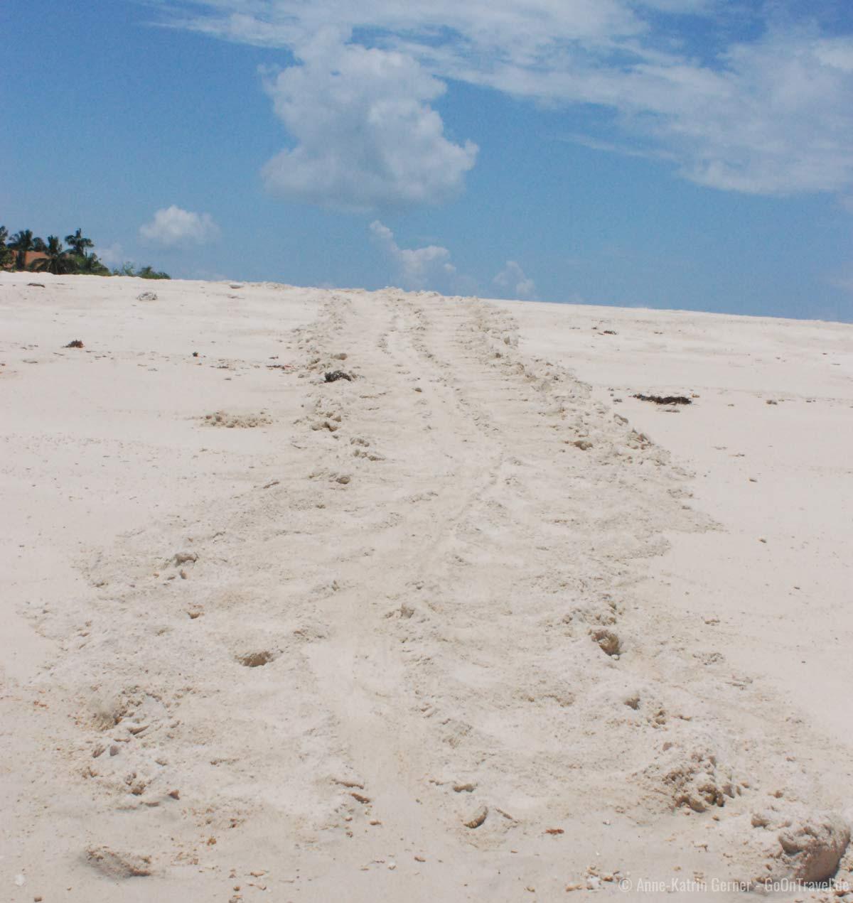 Spur einer Meersschildkröte