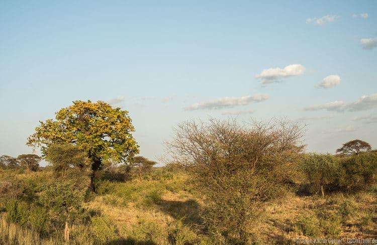 Szenerie mit Baobab im Meru NP