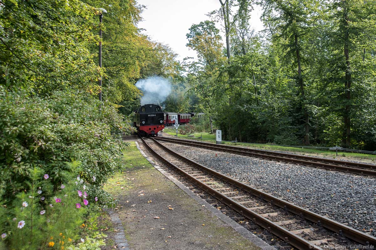 Schmalspurbahn Molli fährt in Heiligendamm ein