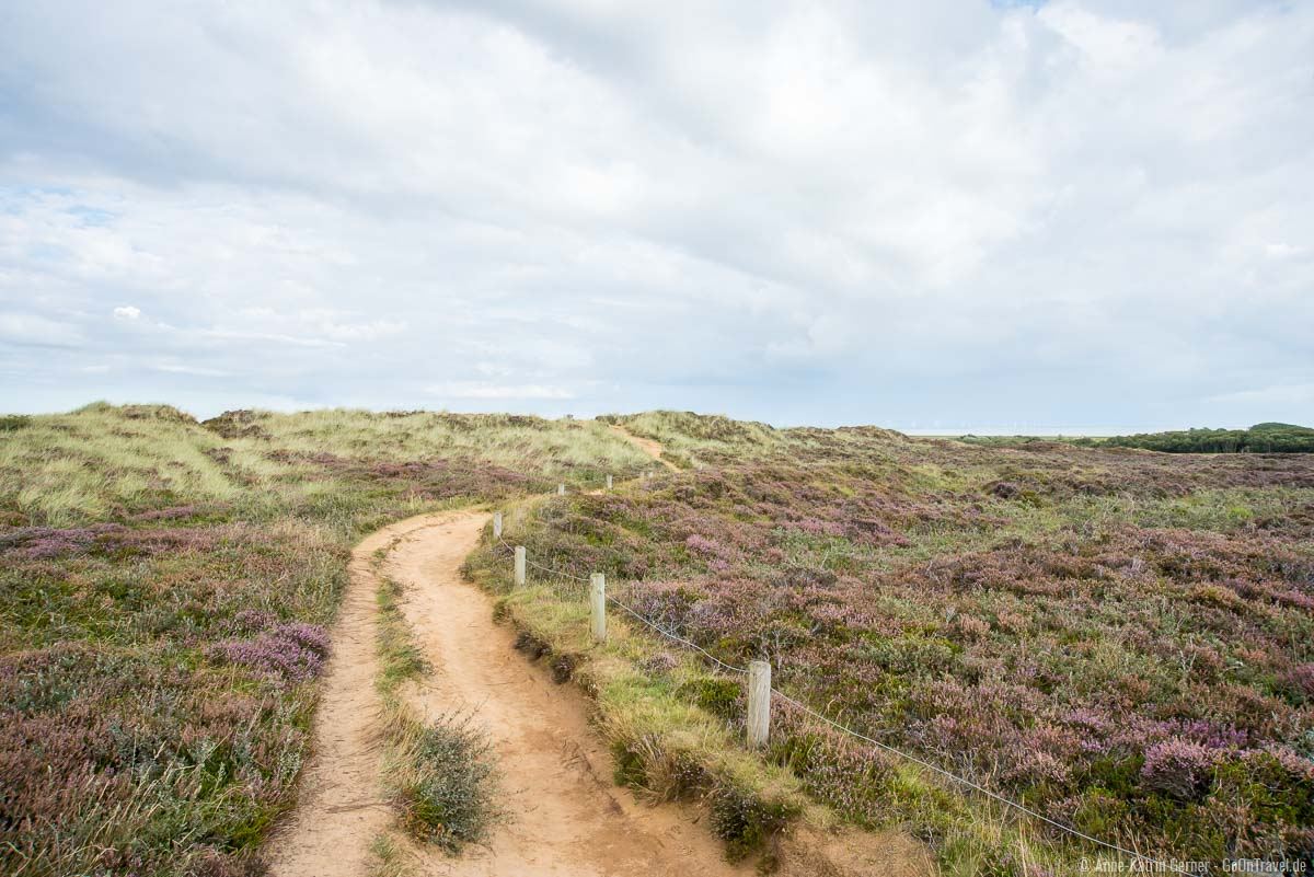 Rundwanderweg durch die Heide am Morsum Kliff
