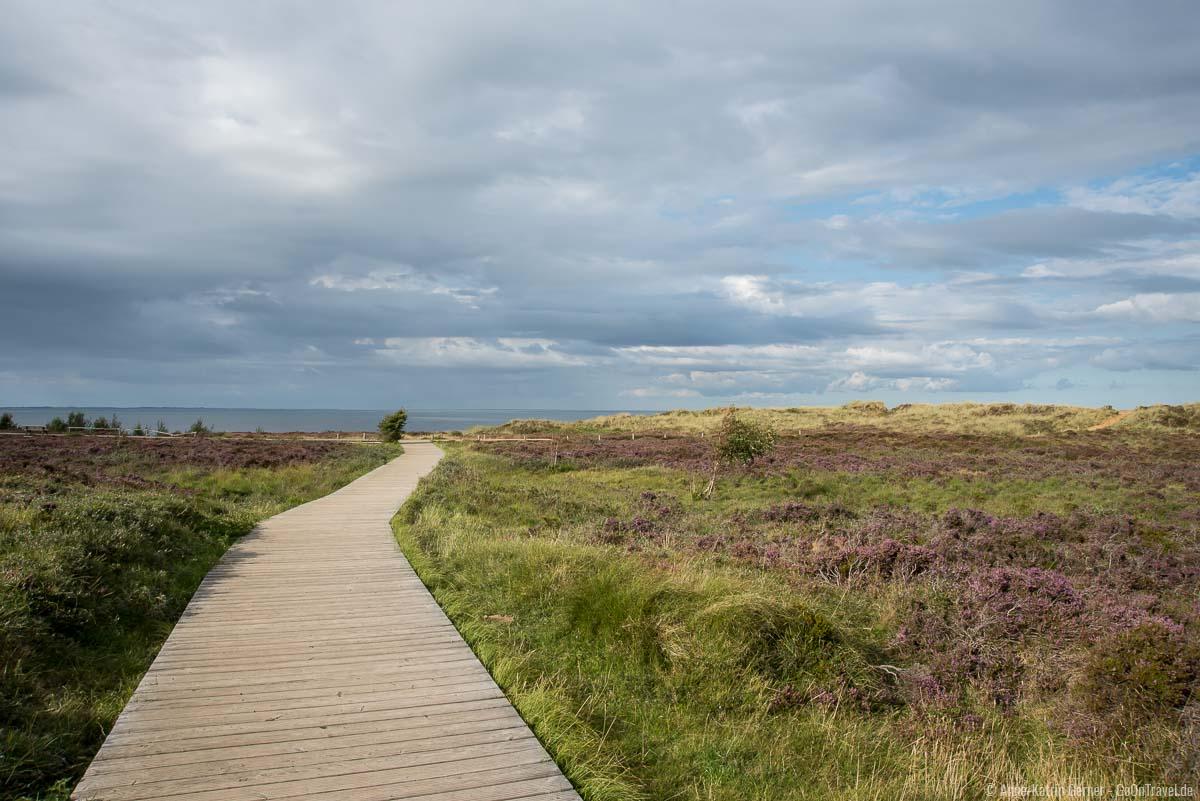 Holzsteg durch die Heide zum Aussichtspunkt Morsum Kliff