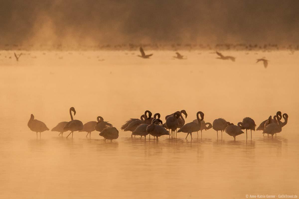 Flamingos im Nakurusee zum Sonnenaufgang