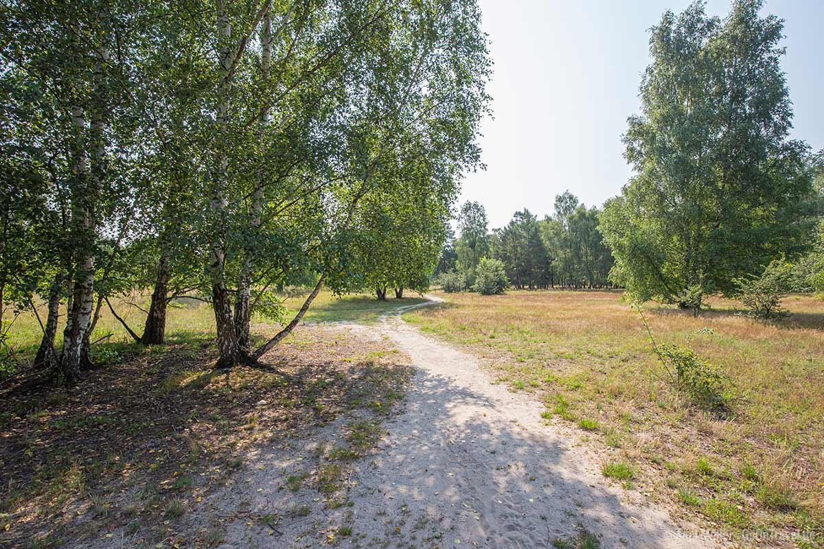 Dahlemer Feld im Grunewald